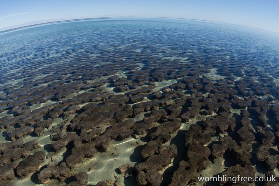 Hamelin Pool. One of the few locations of living stromatolites in Australia.